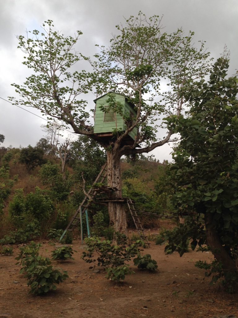 IMG_0361-tree-house